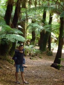 St Columba falls - huge tree ferns
