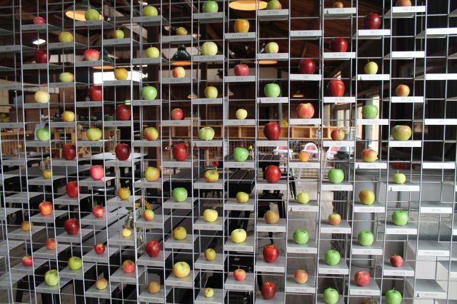 Apple varieties wall