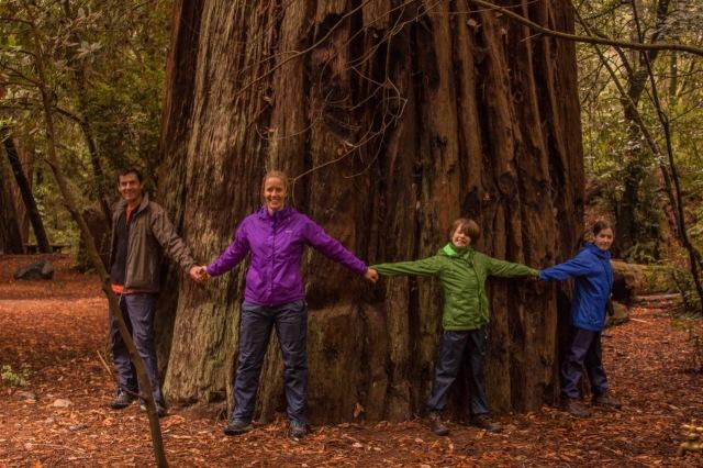 redwoods-8